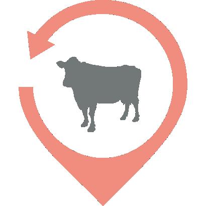 La Carniceria de Cádiz